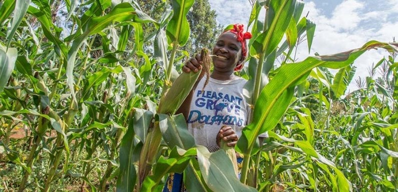 Nairobi talks seek boost to seed and agriculture in Eastern and Southern Africa