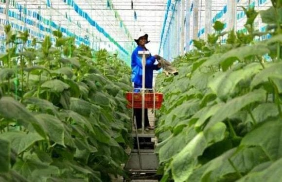 German government invests US$10.99m in Mozambique agriculture sector