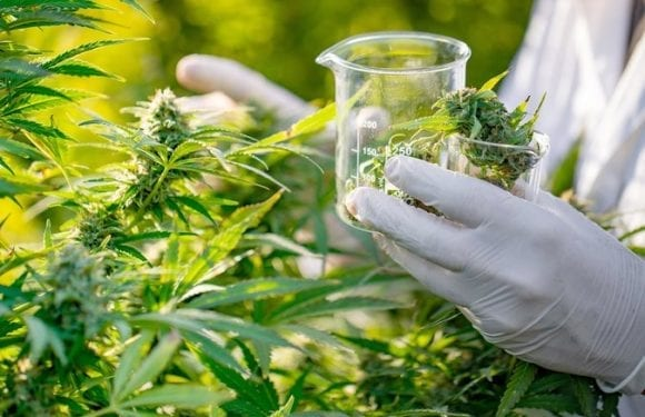 Labat Africa enters cannabis market, secures trading licence in Lesotho