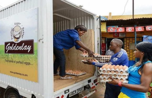 UK-based AgDevCo invests in Zambia's leading eggs supplier Goldenlay