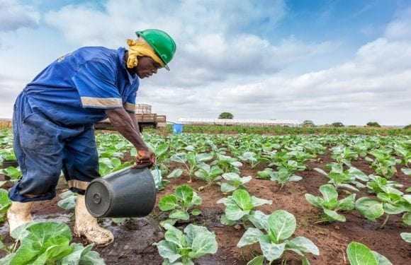 Agricultural agency efforts bear fruits as Nigeria records decline in rejection of agro exports