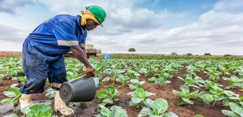 FMO invests US$7.5m in the Acumen Resilient Agriculture Fund